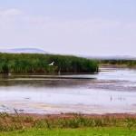 Excursii - Pensiunea Lebada, Cazare in Delta Dunarii, Cazare Tulcea, Pensiune Delta Dunarii (10)