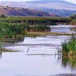 Excursii - Pensiunea Lebada, Cazare in Delta Dunarii, Cazare Tulcea, Pensiune Delta Dunarii (2)