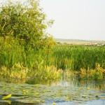 Excursii - Pensiunea Lebada, Cazare in Delta Dunarii, Cazare Tulcea, Pensiune Delta Dunarii (29)