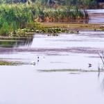 Excursii - Pensiunea Lebada, Cazare in Delta Dunarii, Cazare Tulcea, Pensiune Delta Dunarii (3)