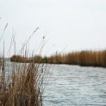 Excursii - Pensiunea Lebada, Cazare in Delta Dunarii, Cazare Tulcea, Pensiune Delta Dunarii (34)