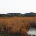 Excursii - Pensiunea Lebada, Cazare in Delta Dunarii, Cazare Tulcea, Pensiune Delta Dunarii (37)