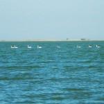 Excursii - Pensiunea Lebada, Cazare in Delta Dunarii, Cazare Tulcea, Pensiune Delta Dunarii (40)