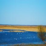 Excursii - Pensiunea Lebada, Cazare in Delta Dunarii, Cazare Tulcea, Pensiune Delta Dunarii (47)
