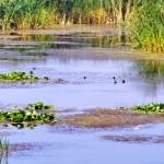 Excursii - Pensiunea Lebada, Cazare in Delta Dunarii, Cazare Tulcea, Pensiune Delta Dunarii (5)