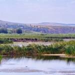 Excursii - Pensiunea Lebada, Cazare in Delta Dunarii, Cazare Tulcea, Pensiune Delta Dunarii (7)